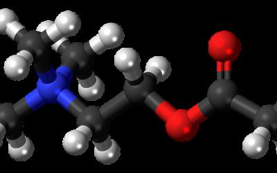 Neurotransmitters; wat zijn dat eigenlijk?